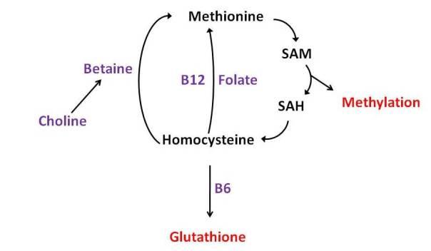 MethylationPathway